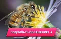 Спасем пчел - осталось24часа!