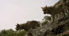 Среди волков (Фильм, 2010)