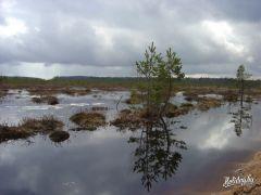 «Торфяное лобби предложило осушить болота Березинского заповедника и Припятского нацпарка».