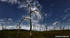 Как спасают болото Ельня