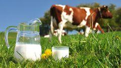 Молоко: вред или польза?