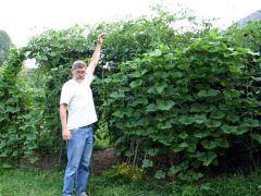 американский аграрий Шеферд Огден