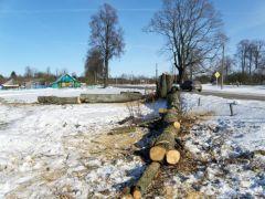 Вёска Казлоўшчына (Пастаўскі р-н). У цэнтры паселішча пілуюць 200-гадовыя ліпавыя прысады, якія пасадзілі князі Друцкія-Любецкія.