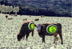 Почему в Германии гибнет скот и закрываются фермы?