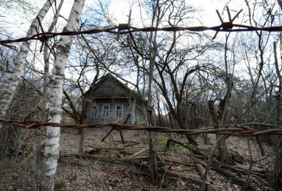 Заброшенная деревня Вежище в белорусской зоне отчуждения. Фото: Виктор Драчев / AFP
